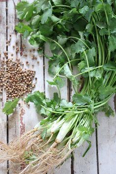 Fresh coriander - root to tip