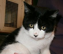 Gato Victor. Mimoso, agradecido y muy hogareño. Animals, Kittens For Adoption, Grateful, Foot Prints, Gatos, Animales, Animaux, Animal, Animais