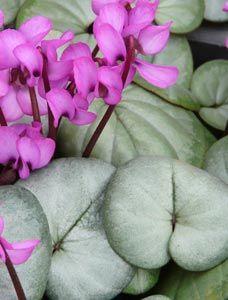 Die 36 Besten Bilder Von Bodendecker Ground Cover Plants Garden