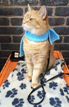 Great pic of Bob out in Covent Garden - Katzen - I Love Cats, Cute Cats, Funny Cats, Crazy Cat Lady, Crazy Cats, A Cat Named Bob, Kittens Cutest, Cats And Kittens, Bobcat Pictures