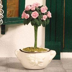 Standard Garden Rose