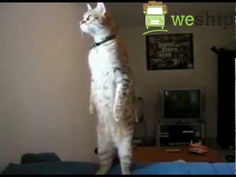 How you feel like while waiting for your shipment...   احساسك و انت مستني شحنتك توصل  #cute #cat #waiting #Dubai #shipment #weship #courier #Domestic #international #kitty #meow #UAE  #قطة #كيوت #شحن #جوي #دولي #محلي #بريد #ساعي #وي_شيب #دبي #الإمارات  https://weship.to/ https://twitter.com/weship_to https://www.linkedin.com/company/weship-to https://www.pinterest.com/weship_EN/weship/ http://instagram.com/weship.to