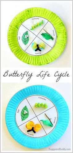 Butterfly Life Cycle Paper Plate Craft for Kids (w/ FREE template)~ http://BuggyandBuddy.com