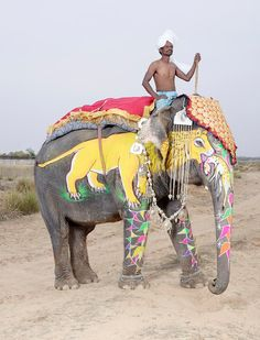 The extraordinary painted elephants of India – in pictures