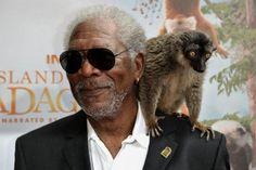 Island of Lemurs: Madagascar Morgan Freeman Adds Gravitas to Documentary