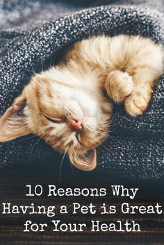 10 Reasons Why Having a Pet is Great for Your Health ~