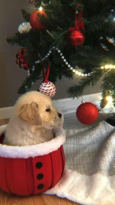 Merry Christmas Wallpaper, Merry Christmas Gif, Merry Christmas Pictures, Christmas Scenery, Christmas Quotes, Christmas Wishes, Christmas Greetings, Christmas Time, Cute Dogs And Puppies