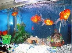 You can use gold fish inside your home to raise the chi, and deflect negativity in the home.