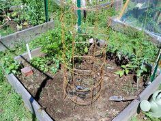 Cucumber tower for square foot gardeners. Great feeding tips too! Cucumber tower for square foot gar Gardening For Beginners, Gardening Tips, Vegetable Gardening, Grow Tower, Tower Garden, Square Foot Gardening, Garden Pictures, Growing Herbs, Summer Garden