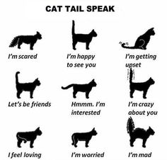 Useful! I have 3 cats
