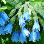 Img Good To Know, Herbalism, Remedies, Health Fitness, Healing, Outfit, Medicine, Plant, Health