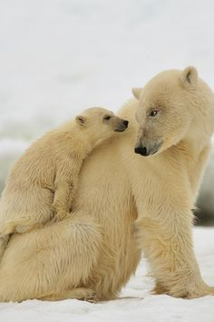 Polar Mom and baby!