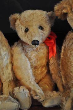 The Jena Pang Collection – Grandma's Teddies Old Teddy Bears, Antique Teddy Bears, Steiff Teddy Bear, Teddy Bear Toys, Plush Animals, Clay Animals, Stuffed Animals, Charlie Bears, Bear Doll