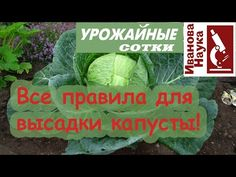 Farm Gardens, Vegetables, Youtube, Vegetable Recipes, Youtubers, Veggies, Youtube Movies