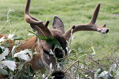 nibbling | Endless Wildlife