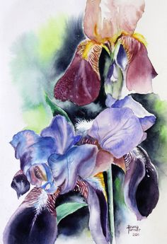 Iris watercolor painting Giclee Print floral by Dianamturnerart