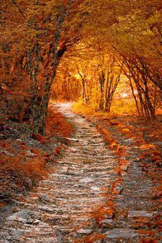 Nice autumn stroll