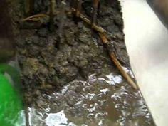 Weathering, Erosion, & Deposition - YouTube