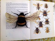 Giant bumble bee - needle felt by Phillipa England