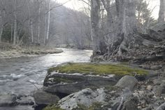 stone stream forest stock by milesmoody