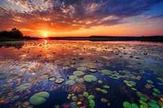 """Sensory Overload by Todd Tobey. """"This is a shot of Talawanda lake near McAlester Oklahoma. The shoreline is covered with lily pads and a variety of ponds weeds. It is quite a beautiful spot."""""""