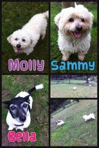 Molly Sammy and Bella. kennels melbourne