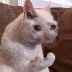 when I am watching drama lol Memes Humor, Cat Memes, Funny Memes, Hilarious, Cute Cats, Funny Cats, Funny Animals, Cute Animals, Sad Cat Meme