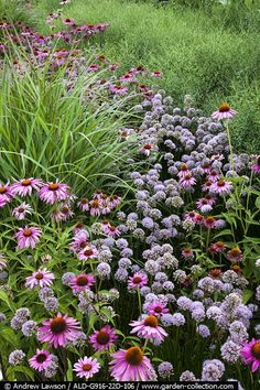 The Olympic Park, London 2012; plantings by Sarah Price, James Hitchmough and Nigel Dunnett; The American Garden, plants include Echinacea, Rudbeckia, Verbena, Allium, Asclepias