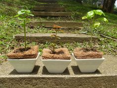Plantas aromáticas: albahaca, menta, romero, hierbabuena, manzanilla, entre otras.