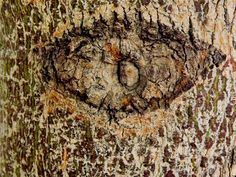 tree_bark_texure_by_darkdawn_rain-d64nmyl.jpg (1024×768)