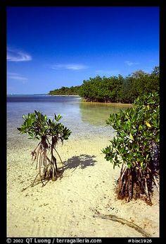 Mangrove shoreline on Elliott Key near the harbor, afternoon. Biscayne National Park, Florida. Photo: QT Luong, terragalleria.com