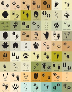 Each of the 63 one-inch squares features and identifies a different track belonging to the most common North American animals.
