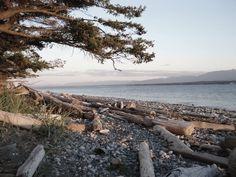 sfeerfoto Driftwood