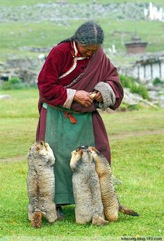 Good old Tibetan lady feeding animals.(But I have no idea what they are, humongous mouse?) They are marmots!