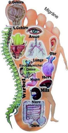 Peripheral mechanisms - Mechanisms of Acupuncture-Electroacupuncture on Persistent Pain - Tao - Physical Therapy Reflexology Massage, Foot Massage, Health Tips, Health And Wellness, Health Fitness, Health Care, Acupressure Treatment, Acupressure Therapy, Massage Techniques