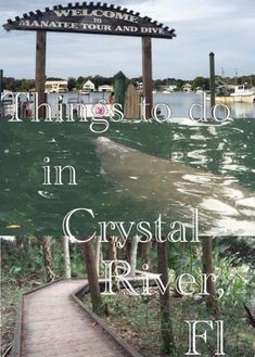Life's Sweet Journey: FloRida Road Adventure to Crystal River Visit Florida, Florida Living, Florida Vacation, Florida Travel, Vacation Trips, Vacation Spots, Day Trips, Travel Usa, Vacations