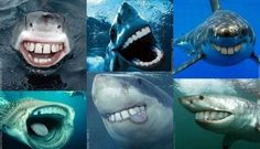 I'd like sharks better if they all looked like this haha