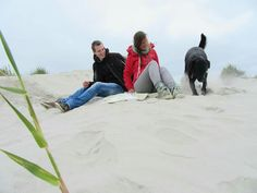 Schiermonnikoog, basso , zwarte labrador