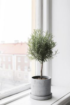On The Net Landscape Design And Style - The New On-line Tool That Designers Are Flocking To For Landscape Designs Gardening - Rosemary Topiary. Deco Nature, Pot Plante, Concrete Planters, Wall Planters, Succulent Planters, Hanging Planters, Succulents Garden, Foliage Plants, Plantation