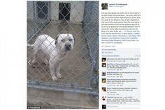 Un pitbull iba a ser sacrificado porque su dueño pensaba que era gay - Cachicha.com