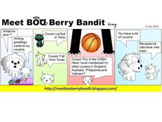 Meet BOO Berry Bandit (BBB): Cats Have 9 Lives