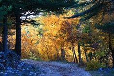 Balade en forêt©Alain Hocquel-ADTVaucluse - #Vaucluse #Provence