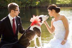Sesja zdjęciowa z pupilem. Wedding session with dog.