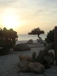 """Divi-divi é a árvore símbolo de Aruba. São todas sempre """"tortinhas"""". #aruba #onehappyisland #divitree #entreviagensblog"""