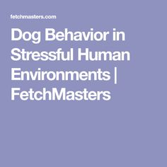 Dog Behavior in Stressful Human Environments | FetchMasters