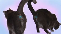 Twinkle Tush will hide your cat's imposing butt from houseguests