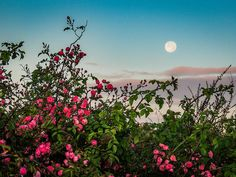June's powerful full moon on the 20th is a very rare occurrence! read more  to find out why!