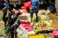 crows waiting for scraps, market, Kandy, Sri Lanka (www.secretlanka.com) India Travel, Kandi, Crows, Sri Lanka, Waiting, Vegetables, Holiday, Food, Ravens