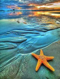 Estrela do mar e do sol Starfish Pretty Pictures, Cool Photos, I Love The Beach, Jolie Photo, Ocean Beach, Sunset Beach, Beach Relax, Playa Beach, Ocean Life