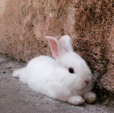 Relaxing bunny